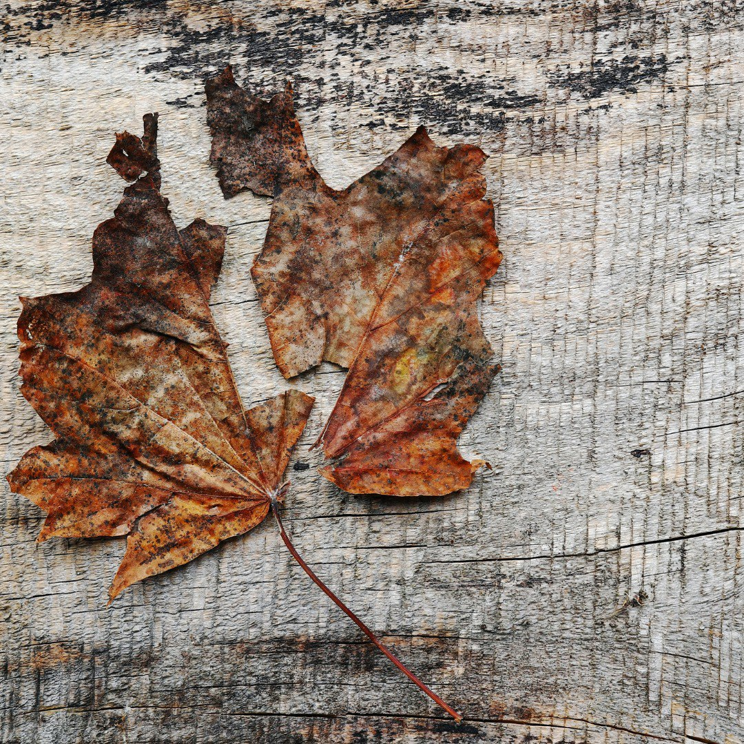 twopart-autumn-leaf-on-a-wooden-background-picture-id1043908970-instagram